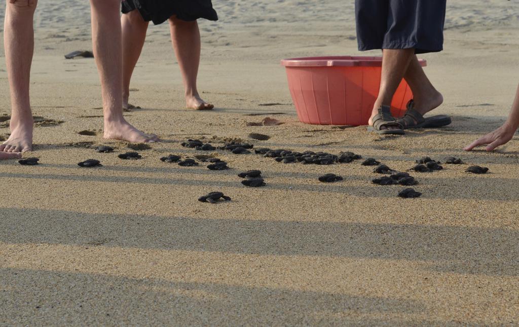 Playa Viva Turtle Release