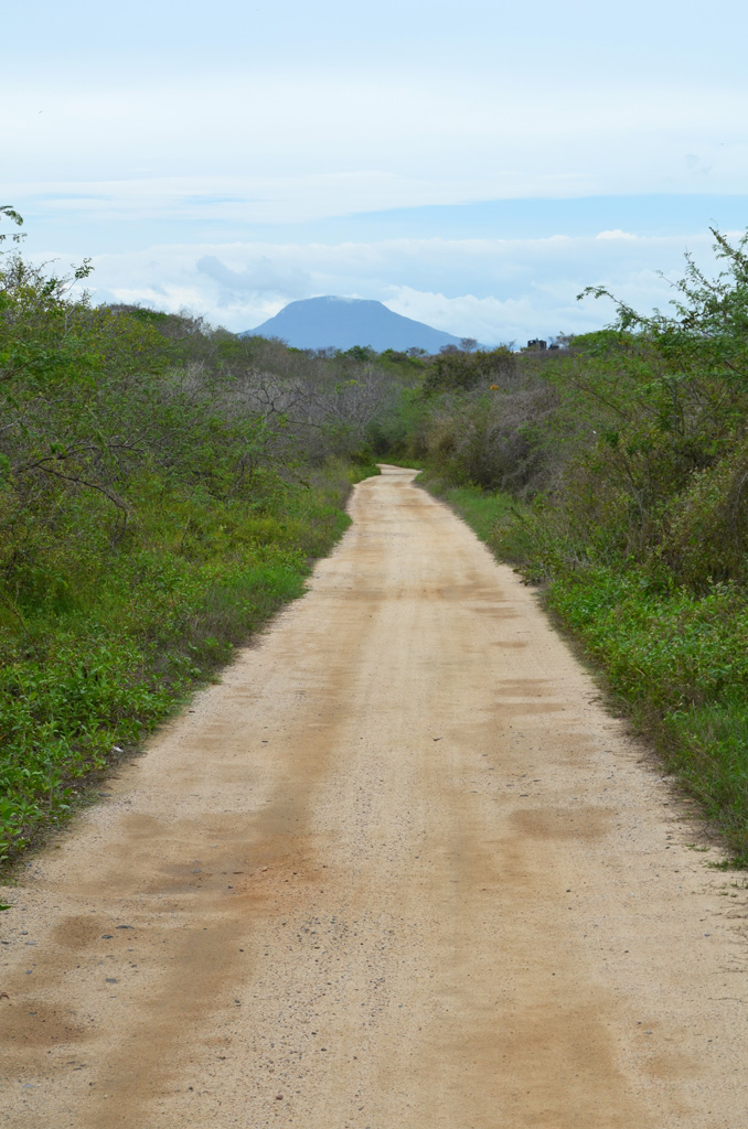 Mexican Mountain Road